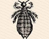 Victorian Louse | Antique Vintage Pediculus capitis | Lice Bug Vector Clip Art SVG PNG JPG Instant Digital Download