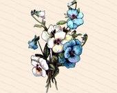 Victorian Floral Blue and White Pansies Vector Clip Art | Antique Pansy Flower | Vintage Viola Botanical Color Instant Download PNG JPG SVG