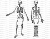 Digital Vintage Edwardian Skeleton   Front and Back   Halloween Vector Clipart Instant Download SVG PNG JPG