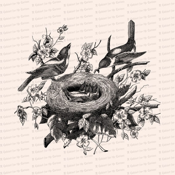 Vintage Bird Nest Clip Art drawing free image