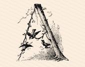Ornamental Penwork Initial Letter A Vector Clipart    Victorian Nature Capital Letter A, Rustic Woodland Birds Antique Monogram SVG PNG JPG
