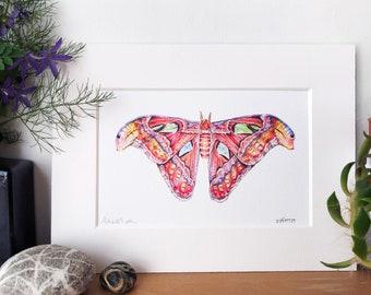 Atlas Moth Intricate Signed Fine Art Print