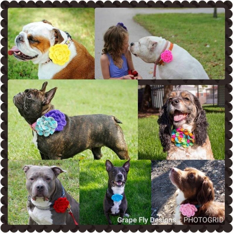 Fundraiser For Dog Food Pantry Dog Collar Flower Crochet Dog image 0