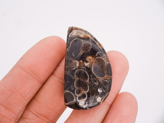 Vintage Turritella Agate Fossil 25x18 Oval Cabochons
