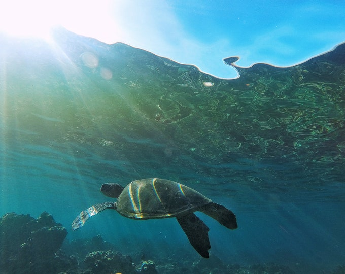 Featured listing image: Cruising Honu (Print Only)