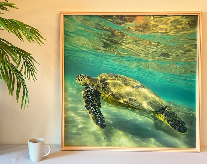 Featured listing image: The Big Honu