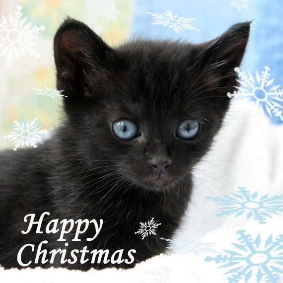 ALL I WANT FOR CHRISTMAS IS CATS GREETING CARD GIFT BLANK XMAS RETRO KITTEN PETS