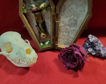 S24b Taxidermy Bat Glass Coffin display w Preserved Rose /& bat skull Display