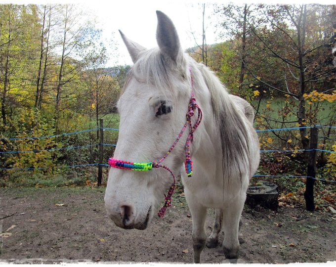 Featured listing image: rope halter, cross-rope halter, halter bridle, riding halter in rope.
