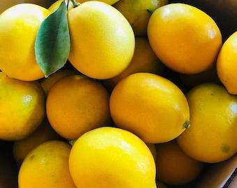 "Organically Grown Meyer Lemons (8lbs) --PRE SEASON ""Uglies"" ** Free Shipping"