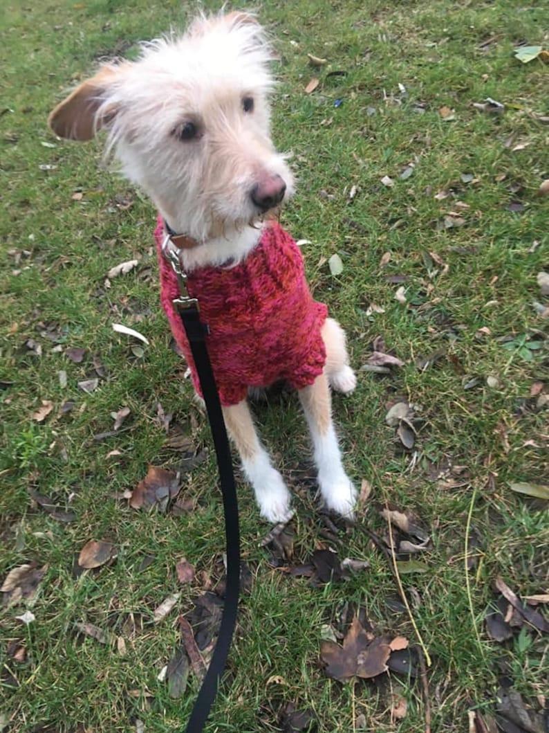 DYLLYS DOG SWEATER on demand