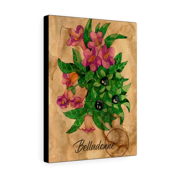 Belladonna (Nightshade) Canvas Gallery Wrap, Witch, Witchcraft, Apothecary, Shaman, Shamanism