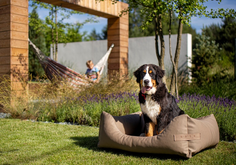 Remarkable Dog Bed Dog Sofa Cat Bed Cat Sofa Dog Couch Outdoor Exclusive Baseoutdoor Interior Design Ideas Oxytryabchikinfo