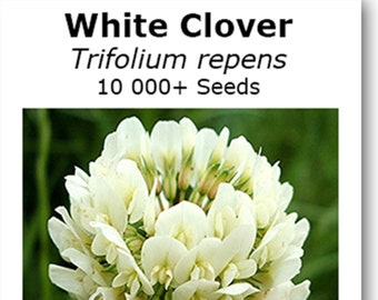Graines de trèfle blanc (Trifolium repens) de 10g environ de 10 000. 125g,  options de quantité 450g 7f64b0bd7b5