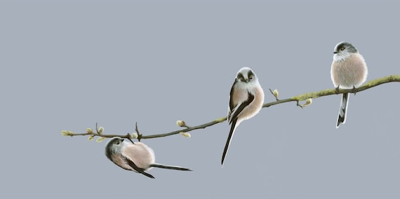 Vic Bearcroft. Open Edition Long-Tailed Tit Print /'The Darling Buds/'