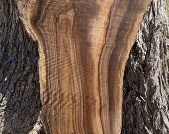 Walnut Slabs, Black walnut, Live edge slabs. Perfect for laser cut, engraving and many more uses. 6-10 x 32