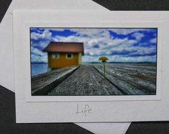 Dandelion on old dock with hut.