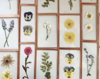 Pressed Flower Frame Etsy