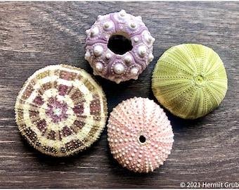 Sea Urchin 4 Piece Set   Hermit Crabs