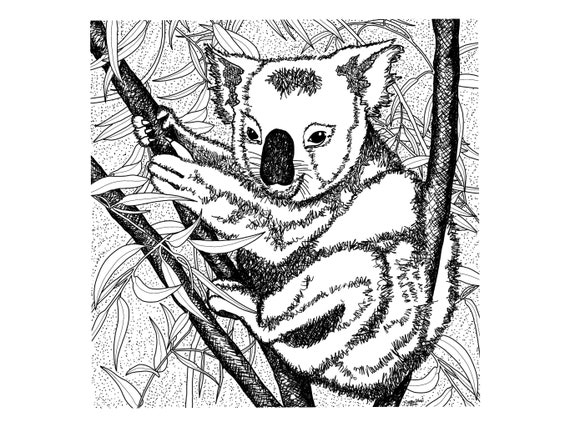 Koala Bear Coloring Page | Bear coloring pages, Animal coloring ... | 427x570