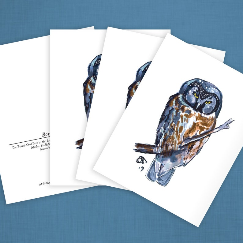 One of a series of Alaska Bird-themed greeting cards Boreal Owl Reproduction of my original watercolor. four card set