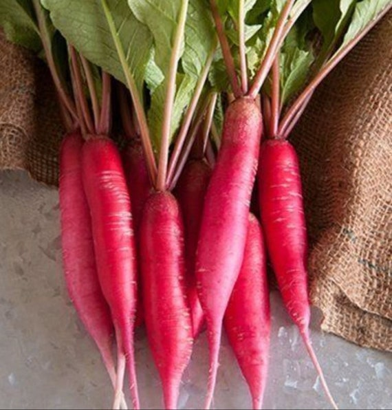 Radish 18 days not GMO.Russian seeds