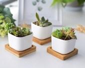 2 quot Set of 3 6 white Ceramic Square Planters pot succulent pot plant vase with bamboo tray for desk decor, Mini container