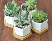 Set of 3 4 6 Hexagon Ceramic Succulent Pots with drain hole, Flower Cactus Geometric Planter with bamboo tray for desk decor, Mini container