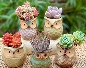 Set of 6 Small Ceramic Owl Succulent Plant Pot Flower Planter Holder Mini Cactus Planter Pots Flower Pot Container Planter