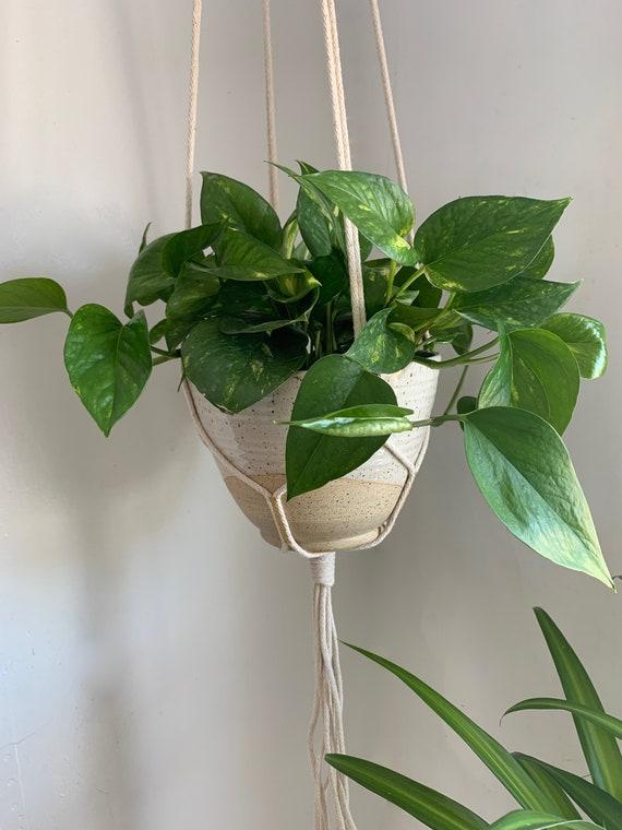 Plant Hanger - Medium