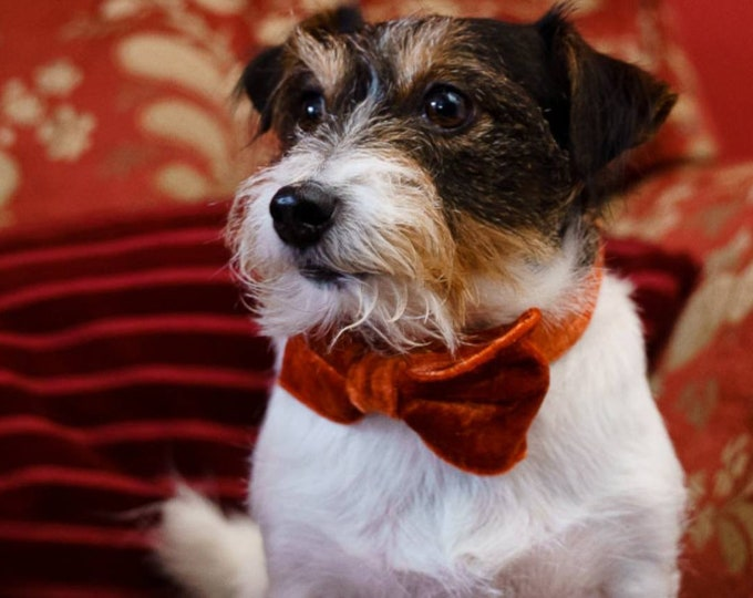 Party Lux Autumn Orange Crushed Rose gold Velvet Bowtie Dog Collar by Ollie + Co