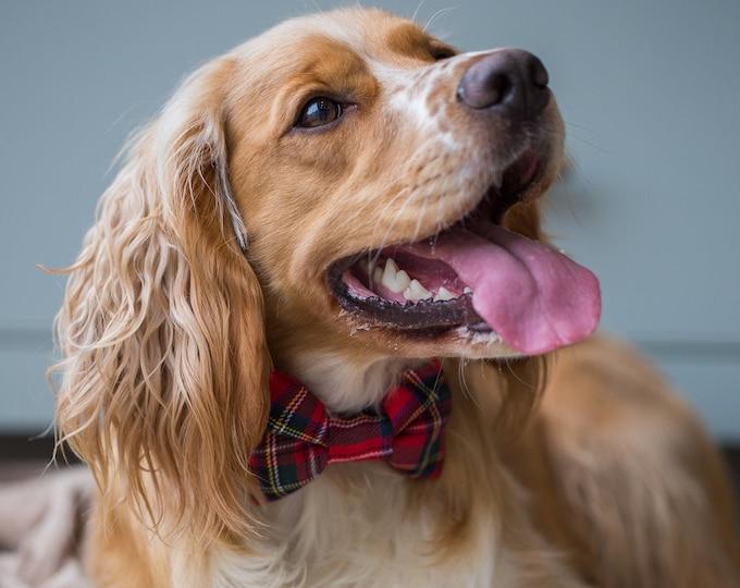 Scottish The Royal Stewart Red Tartan Dog Collar with Bowtie Handmade   Scottish Clan   Ollie & Co