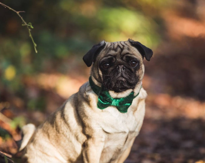 Party Lux Emerald Green Crushed Velvet - Dog Collar Rose Gold Buckle by Ollie + Co