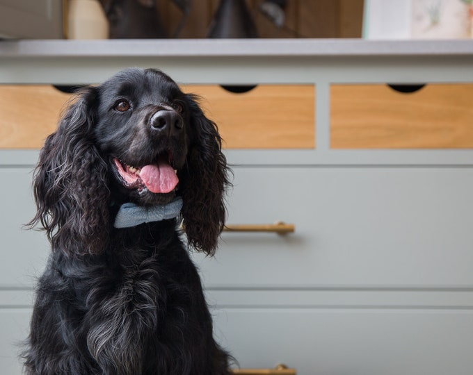 The Ollie - Baby Blue Harris Tweed Dog Collar with Bow Tie   Ollie & Co