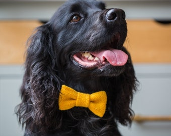 The Archie - Mustard Yellow Harris Tweed Dog Collar with Bow Tie   Ollie & Co