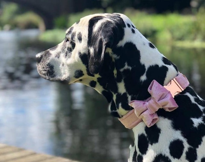 Party Lux Baby Pink Crushed Velvet Set - BowTie Dog Collar Rose Gold Buckle by Ollie + Co