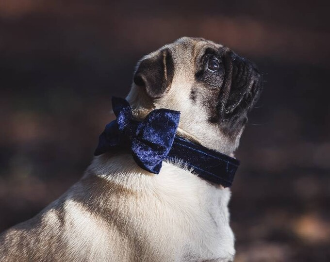 Party Lux Midnight Blue Crushed Velvet Rosegold - BowTie Dog Collar by Ollie + Co