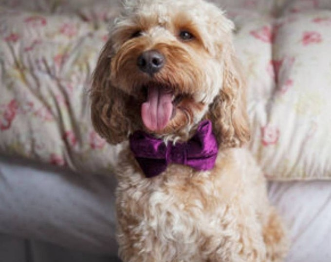 Party Lux Parklane Deep Fusia Pink Crushed Velvet Set BowTie Dog Collar Rose Gold Buckle by Ollie + Co