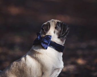 Party Lux Midnight Blue Crushed Velvet - BowTie Dog Collar Rose Gold Buckle by Ollie + Co