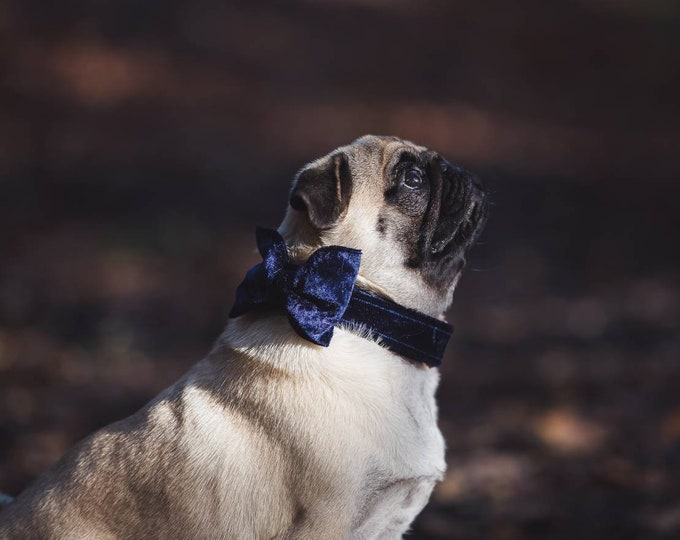 Party Lux Midnight Blue Crushed Velvet - BowTie Dog Collar by Ollie + Co