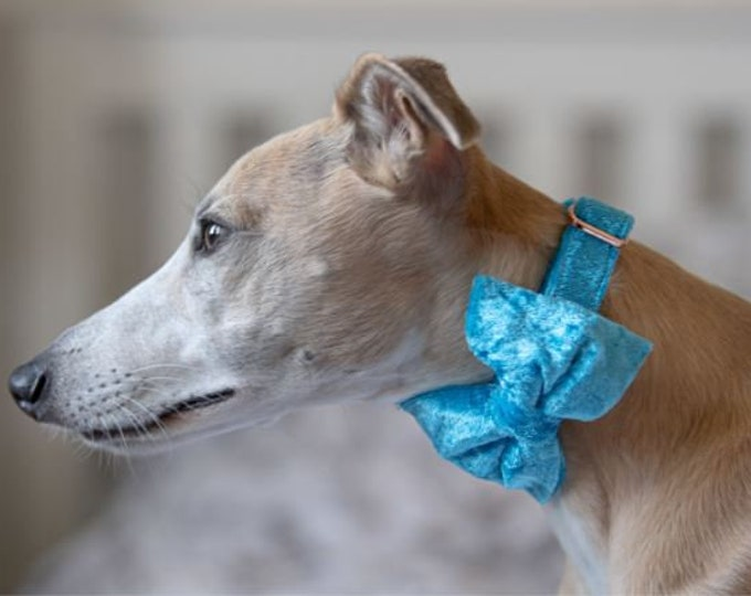 Party Lux Sky Blue Crushed Velvet - BowTie Dog Collar Rose Gold Buckle by Ollie + Co