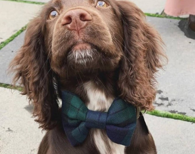 The Black Watch Tartan Scottish Plaid Bowtie Dog Collar by Ollie + Co | Christmas