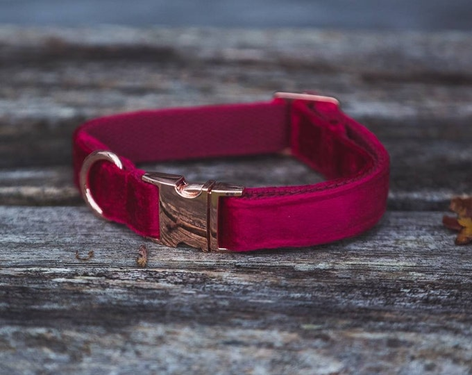 Ruby Red Velvet Dog Collar Luxury Red with Rose Gold Buckle by Ollie + Co