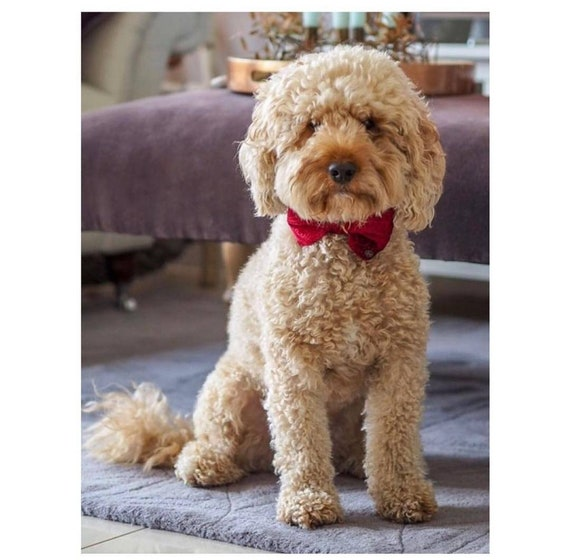 Party Lux Ruby Red Christmas Crushed Velvet Set BowTie Dog Collar by Ollie + Co