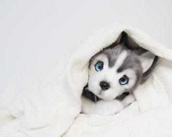 Husky Plush Etsy