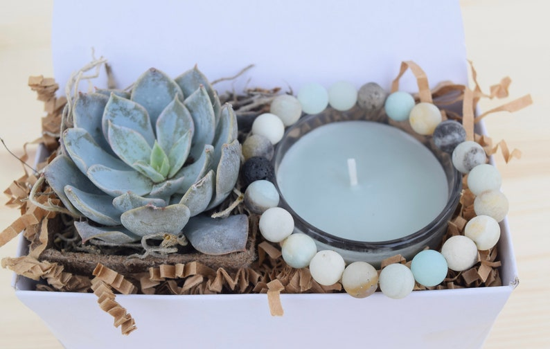 Succulent Gifts Succulent Care Package Gifts that Grow Best Friend Gift Send a Gift Succulent Gift Box Happy Birthday Gift