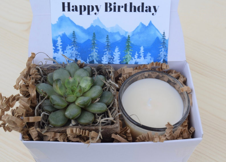 Succulent Gift Box Happy Birthday Gift Friend Gift Send A Gift Succulent Gifts Gifts That Grow Succulent Care Package