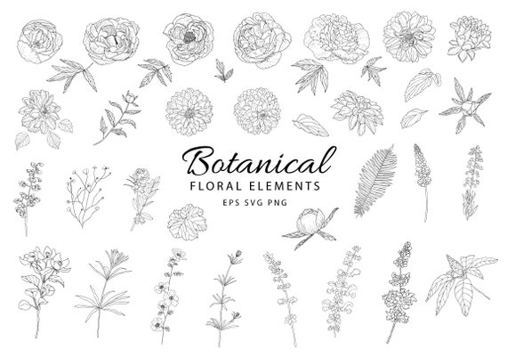 6 Wreaths in EPS and PNG formats 42 Hand drawn Floral Botanical illustrations plants and flowers hand pain floral illustration