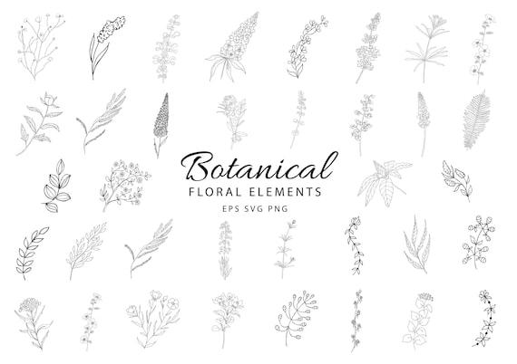 Botanical Clipart Hand Drawn Floral Leaves Leaf Flowers Etsy