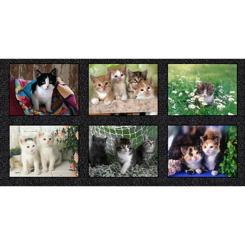 Somebody To Love Cute Puppies Kitten Nursery Cotton Craft Sewing Novelty Quilting Fabric Panel 24\u201c